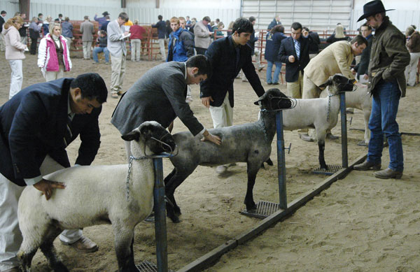 JUCO Livestock Judging Contest
