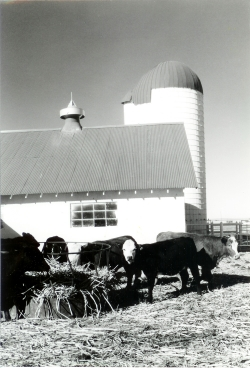 Image of University Farm