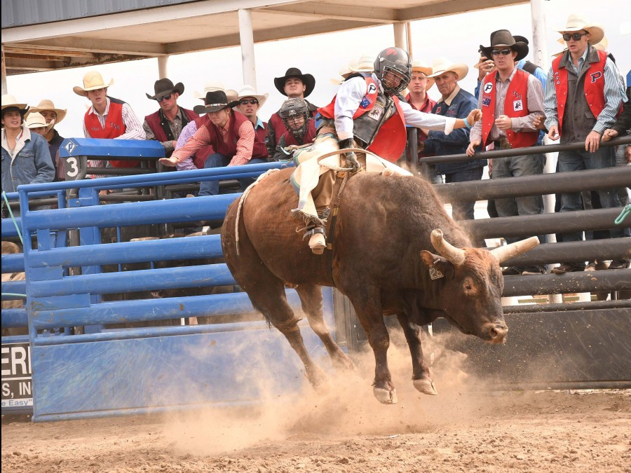 Callum Miller secured the number three spot in the bull riding at the Colby Community College Rodeo this past weekend. —Photo by Dale Hirschman