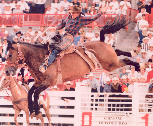 Photo of  Robert  Etbauer, Assistant Rodeo Coach
